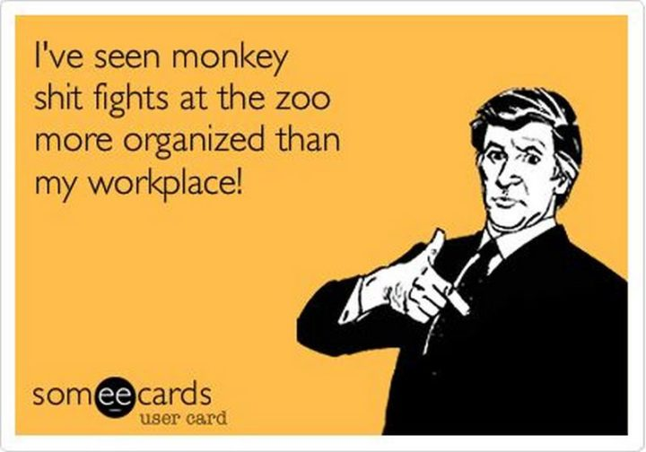 """I've seen monkey [censored] fights at the zoo more organized than my workplace!"""