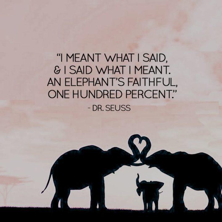 """""""I meant what I said and I said what I meant. An elephant's faithful one-hundred percent!"""""""