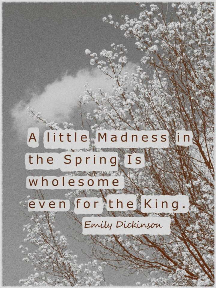 """37 Wholesome May Quotes - """"A little Madness in the Spring Is wholesome even for the King."""" - Emily Dickinson"""