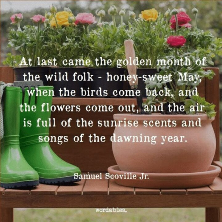 """37 Wholesome May Quotes - """"At last came the golden month of the wild folk - honey-sweet May, when the birds come back, and the flowers come out, and the air is full of the sunrise scents and songs of the dawning year."""" - Samuel Scoville Jr."""