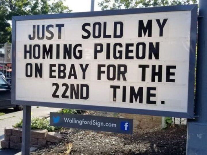 """""""Just sold my homing pigeon on eBay for the 22nd time."""""""