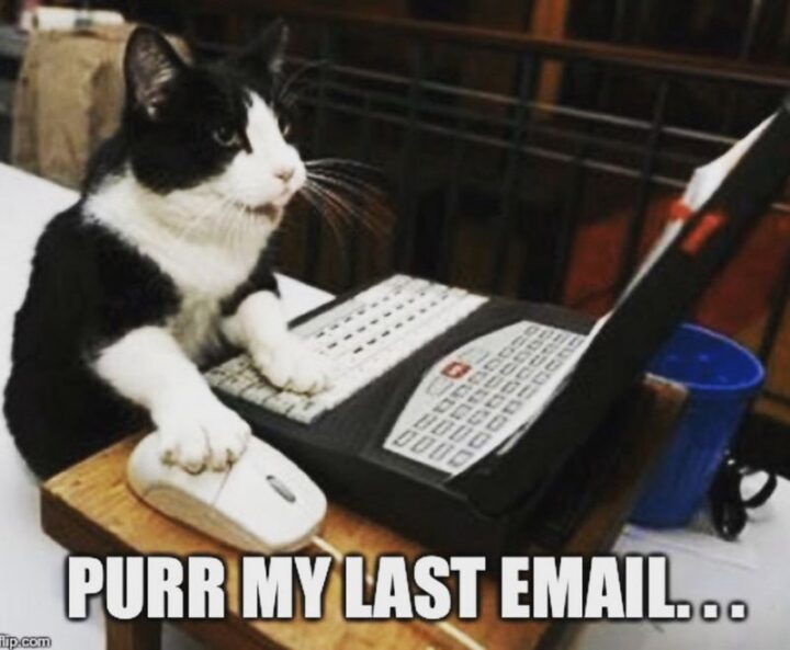 """""""Purr my last email..."""""""