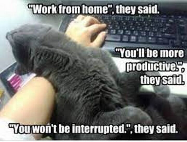 """""""""""Work from home."""", they said. """"You'll be more productive."""", they said. """"You won't be interrupted."""", they said."""""""