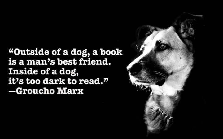 """""""Outside of a dog, a book is man's best friend. Inside of a dog, it's too dark to read."""" - Groucho Marx"""