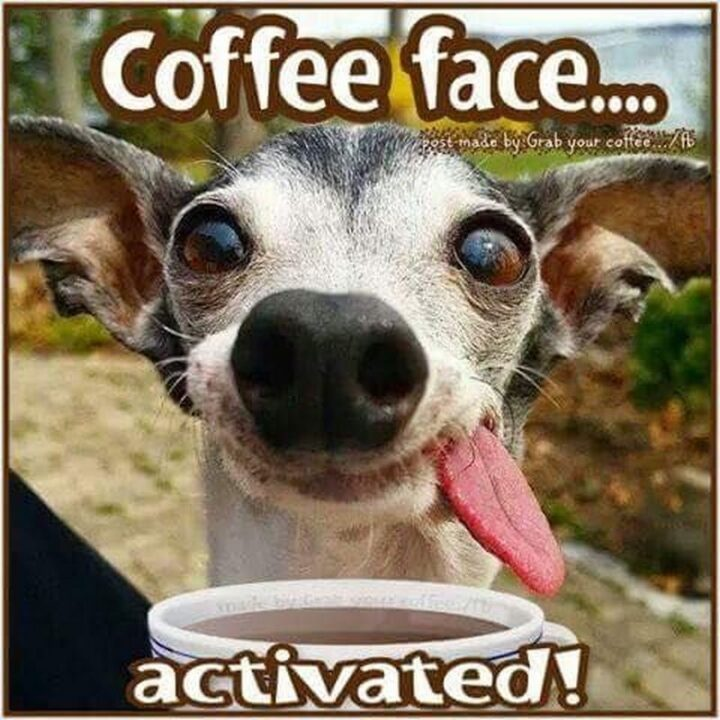 """77 Morning Humor Memes and Quotes - """"Coffee face...Activated!"""""""