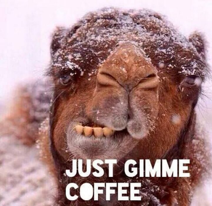"""77 Morning Humor Memes and Quotes - """"Just gimme coffee."""""""