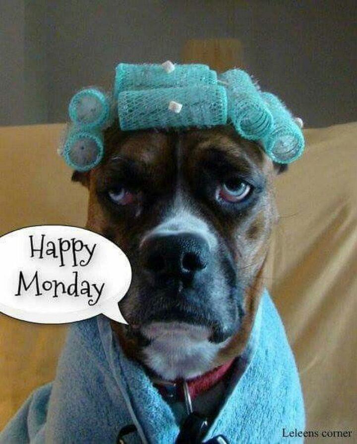 """""""Happy Monday."""""""