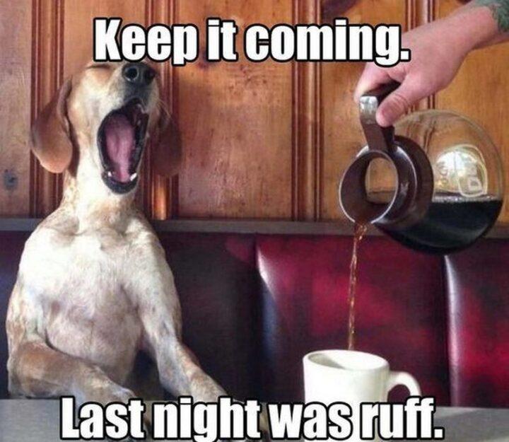 """Keep it coming. Last night was ruff."""