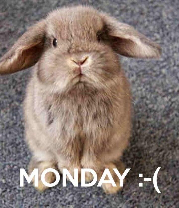 """Monday :-("""