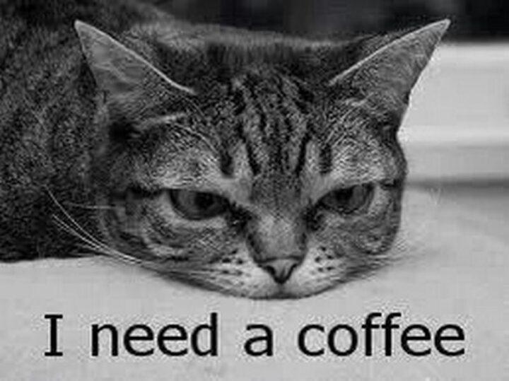"""""""I need a coffee."""""""