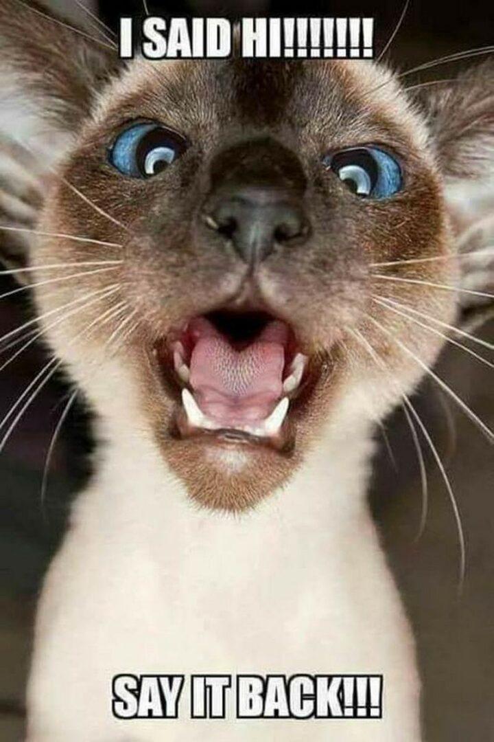 """""""I said hi!!!!!!! Say it back!!!"""""""
