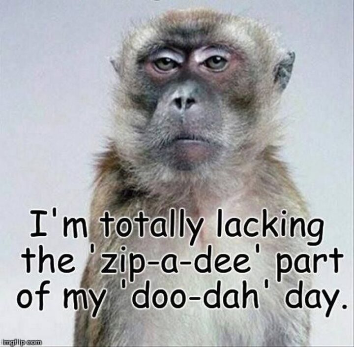 """""""I'm totally lacking the 'zip-a-dee' part of my 'doo-dah' day."""""""
