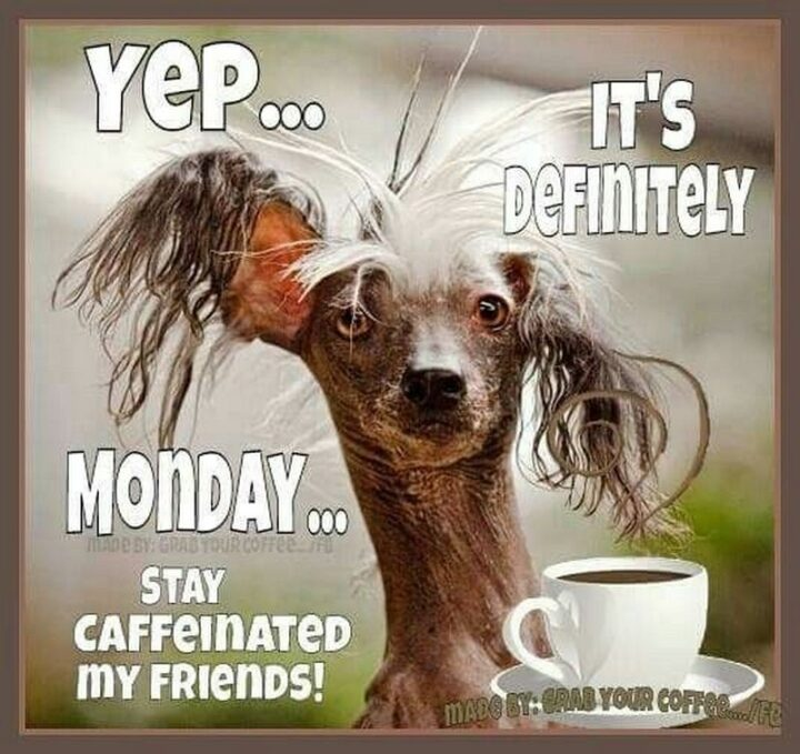 """Yep...It's definitely Monday...Stay caffeinated my friends!"""