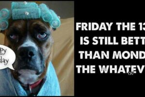 77 Good Morning Humor Quotes and Images to Start Your Day!