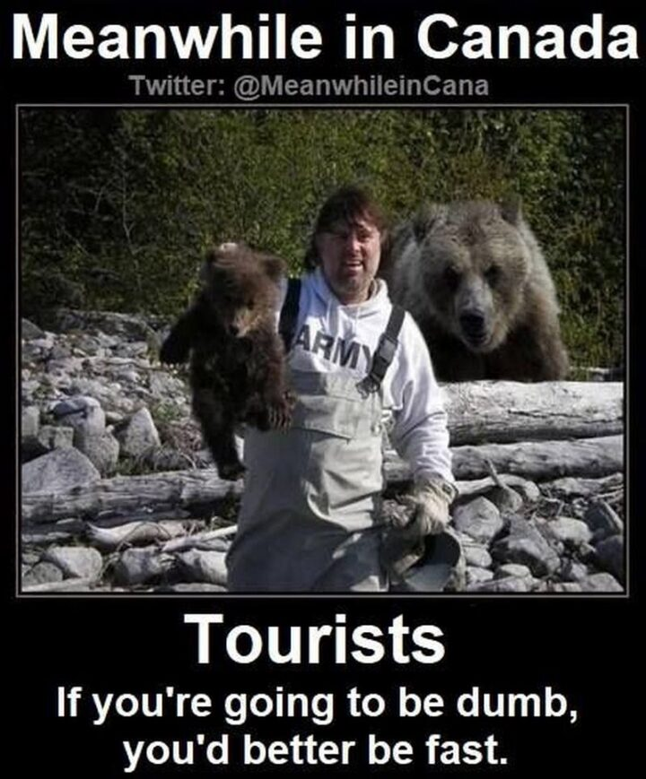 """47 Funny Canadian Memes - """"Meanwhile in Canada...Tourists, if you're going to be dumb you'd better be fast."""""""