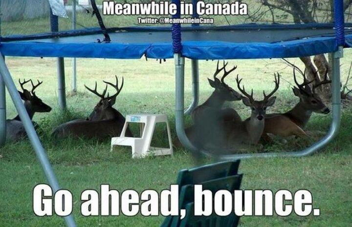 """""""Go ahead, bounce."""""""