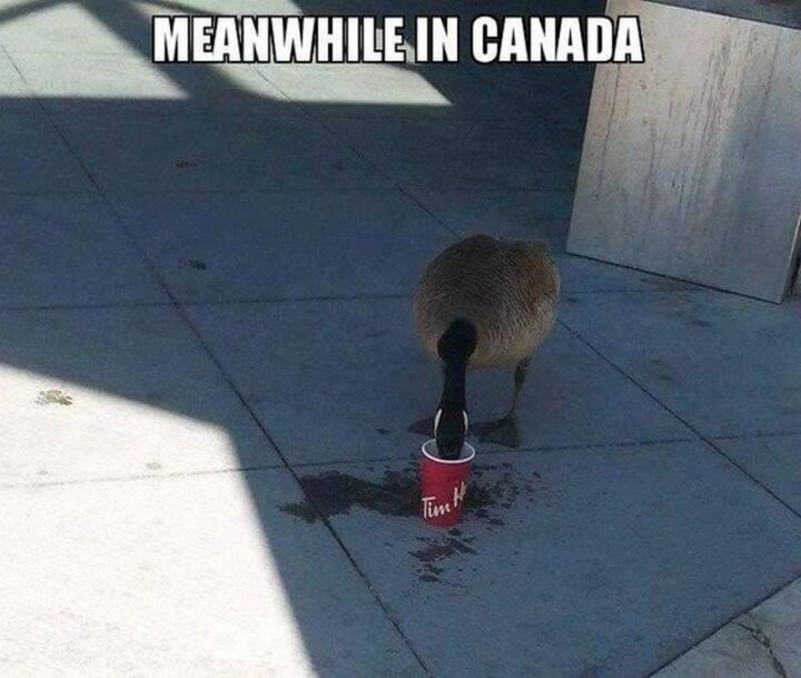 """""""Meanwhile in Canada."""""""