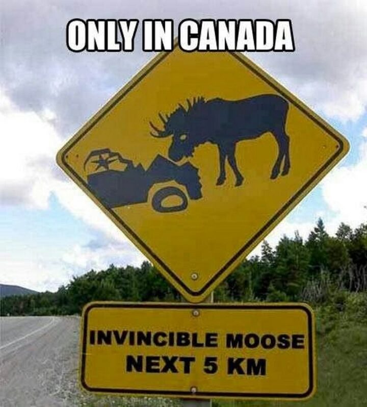 """""""Only in Canada: Invisible moose, next 5 km."""""""