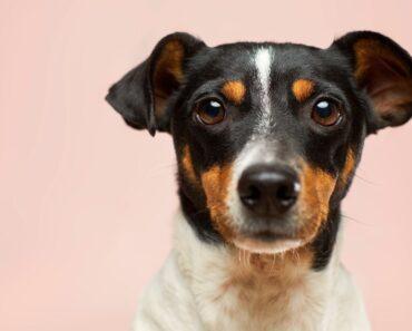 The Benefits Of Having Pet Insurance
