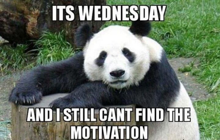 """""""It's Wednesday, hump day, and I still can't find the motivation."""""""
