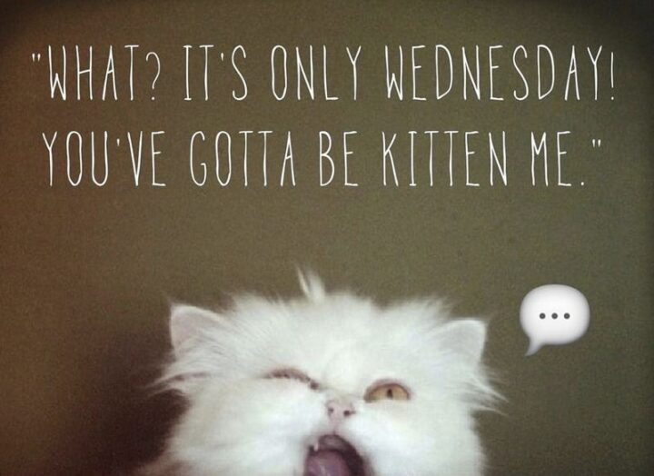 """""""What? It's only Wednesday! You've gotta be """"kitten"""" me."""""""