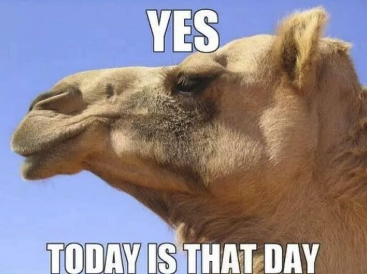 """""""Yes, today is that day. Hump day."""""""