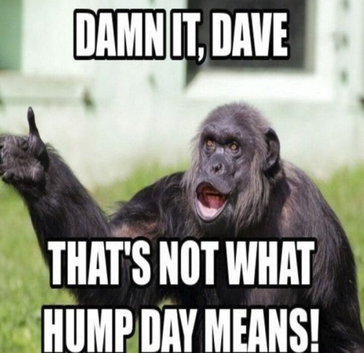 """""""Damn it, dave. That's not what hump day means!"""""""