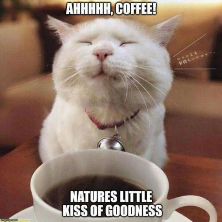 """""""Ahhhhh coffee! Nature's little kiss of goodness."""""""