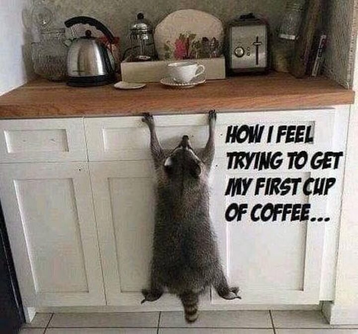 """""""How I feel trying to get my first cup of coffee..."""""""