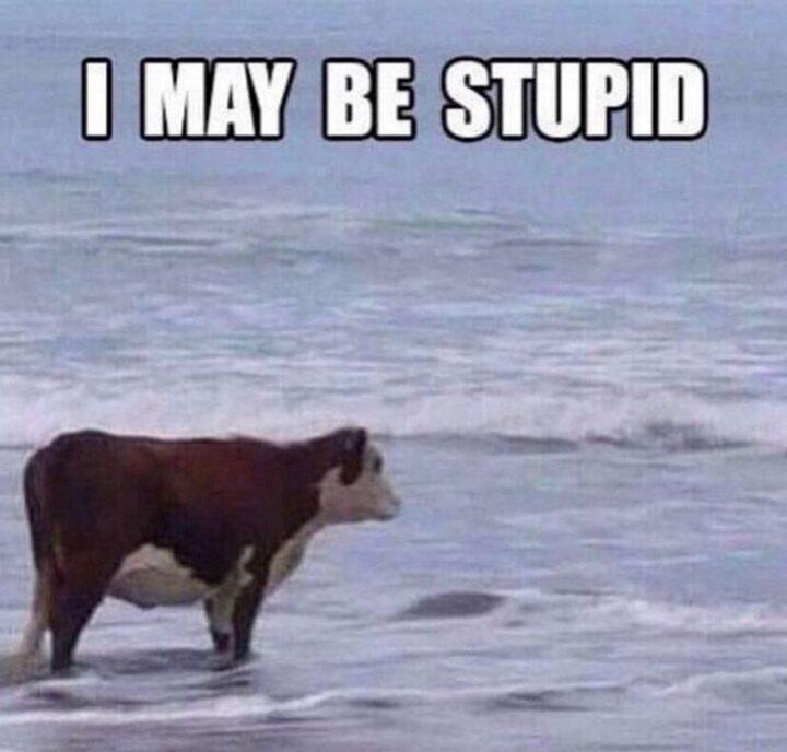 """""""I may be stupid."""""""