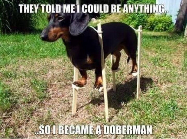 """""""They told me I could be anything...So I became a Doberman."""""""