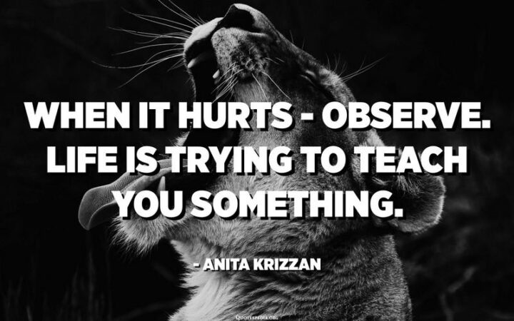 """""""When it hurts - Observe. Life is trying to teach you something."""" - Anita Krizzan"""